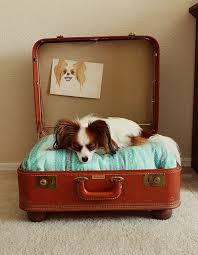 köpek bavul yatak